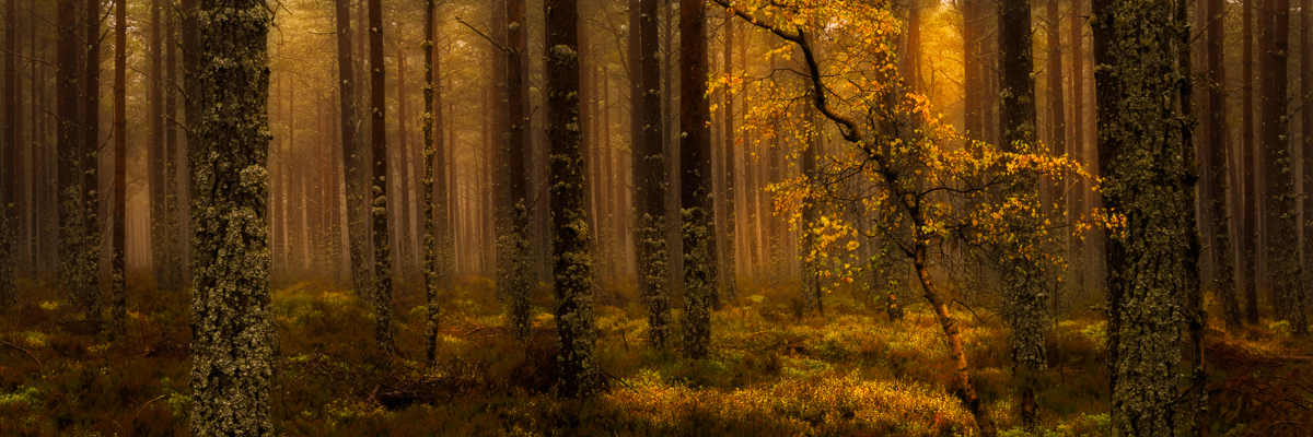 Scotland Autumn Workshop