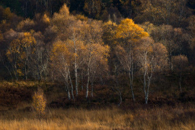 Scotland Autumn, Workshop, Photography, Light