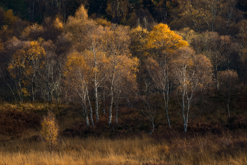 Scotland Autumn, Workshop, Photography, Light