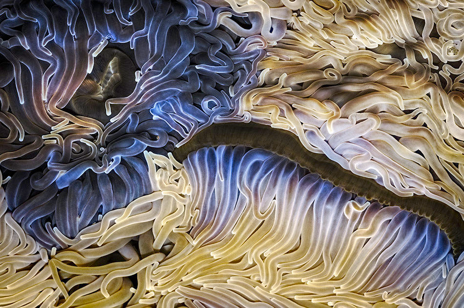 sea anemone abstract